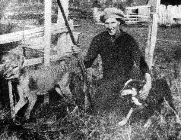 File:Wilf Batty last wild Thylacine.jpg