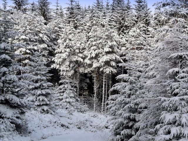 File:Winter wonderland - geograph.org.uk - 681376.jpg ...