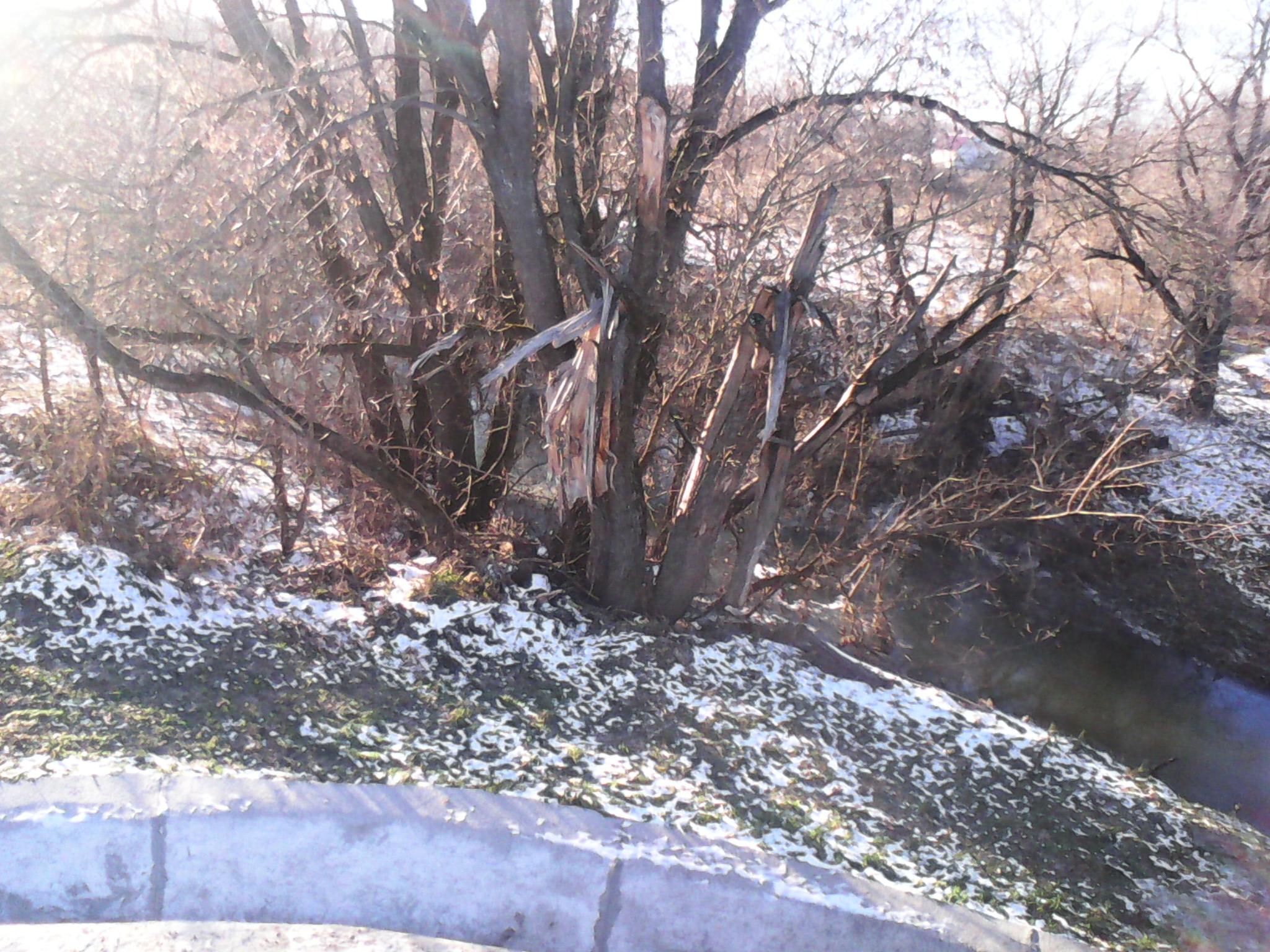 Куда течет река в брянске схема фото 386