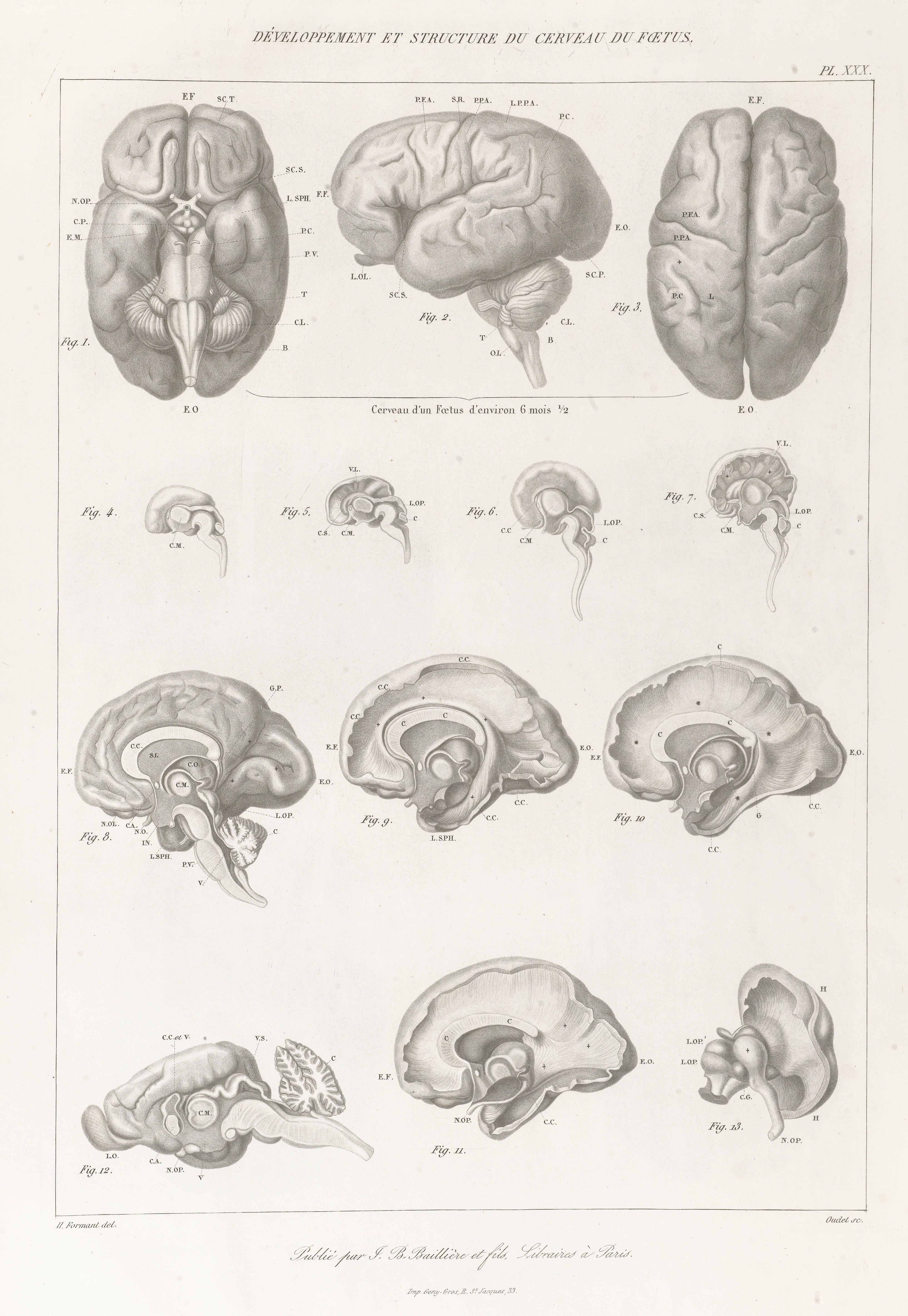 File:Anatomie comparée du système nerveux Wellcome L0068458.jpg ...
