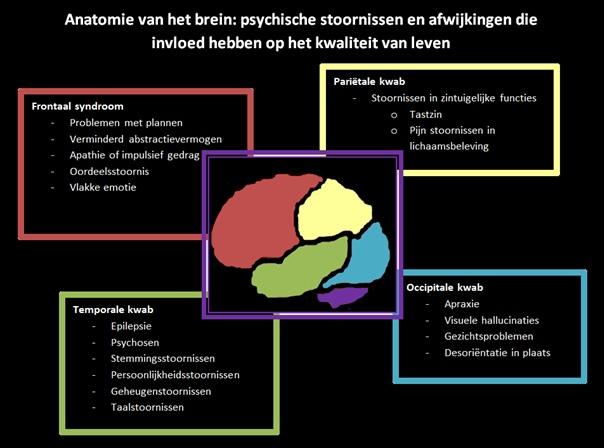 Bestand:Anatomie van het brein.jpg - Wikipedia