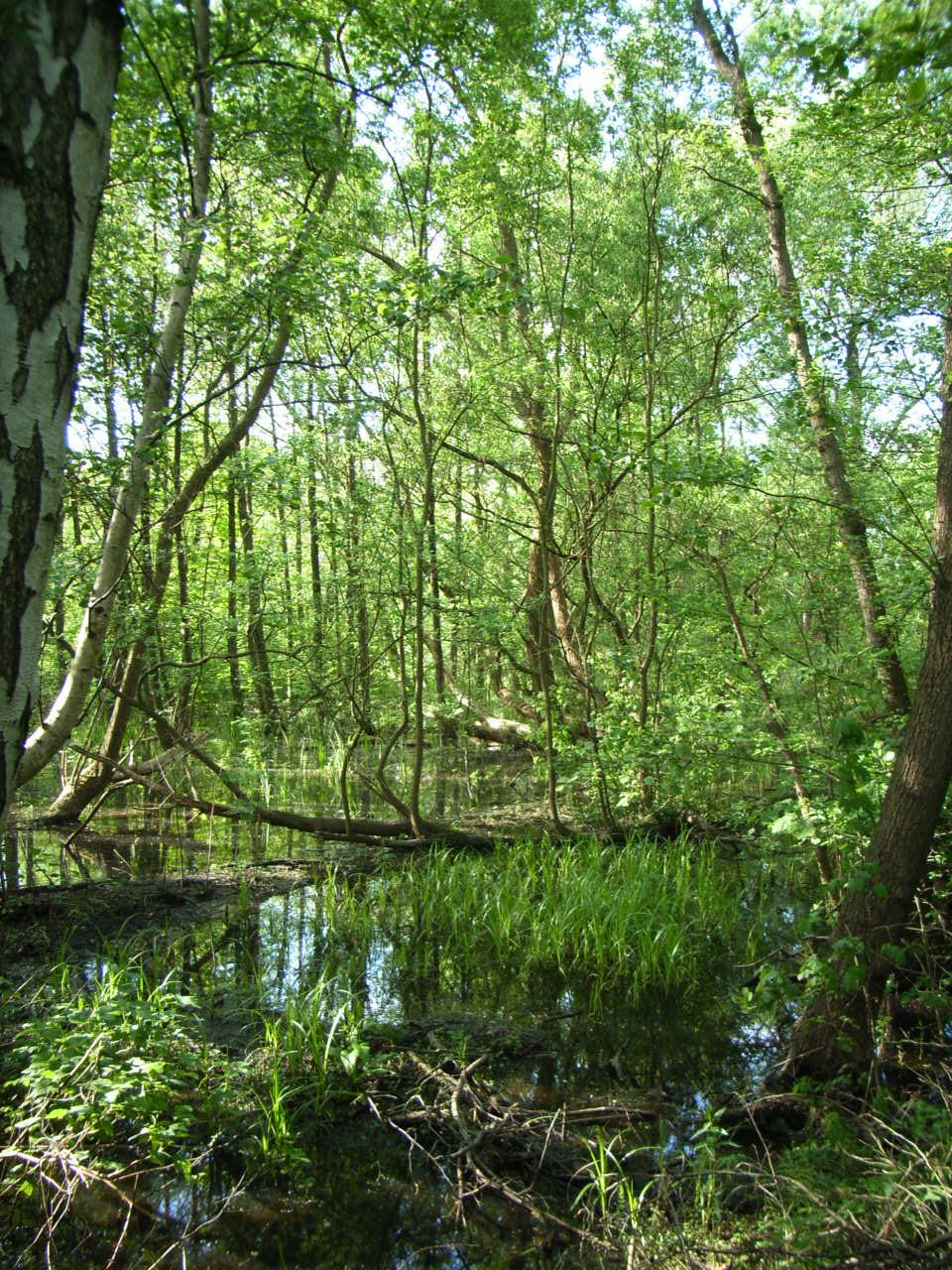 Biotop Hamburg file biotop und erdfall in hamburg groß flottbek jpeg wikimedia
