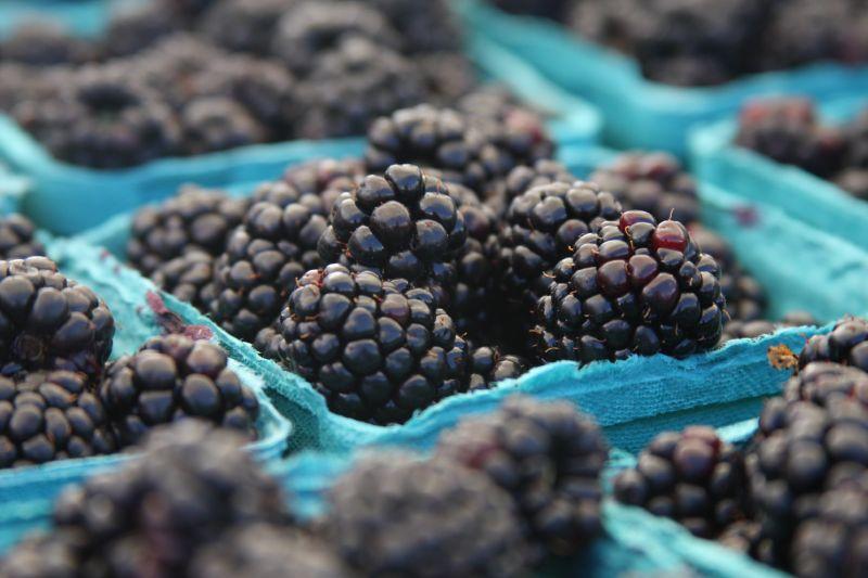 File:Blackberries in containers, 2008.jpg