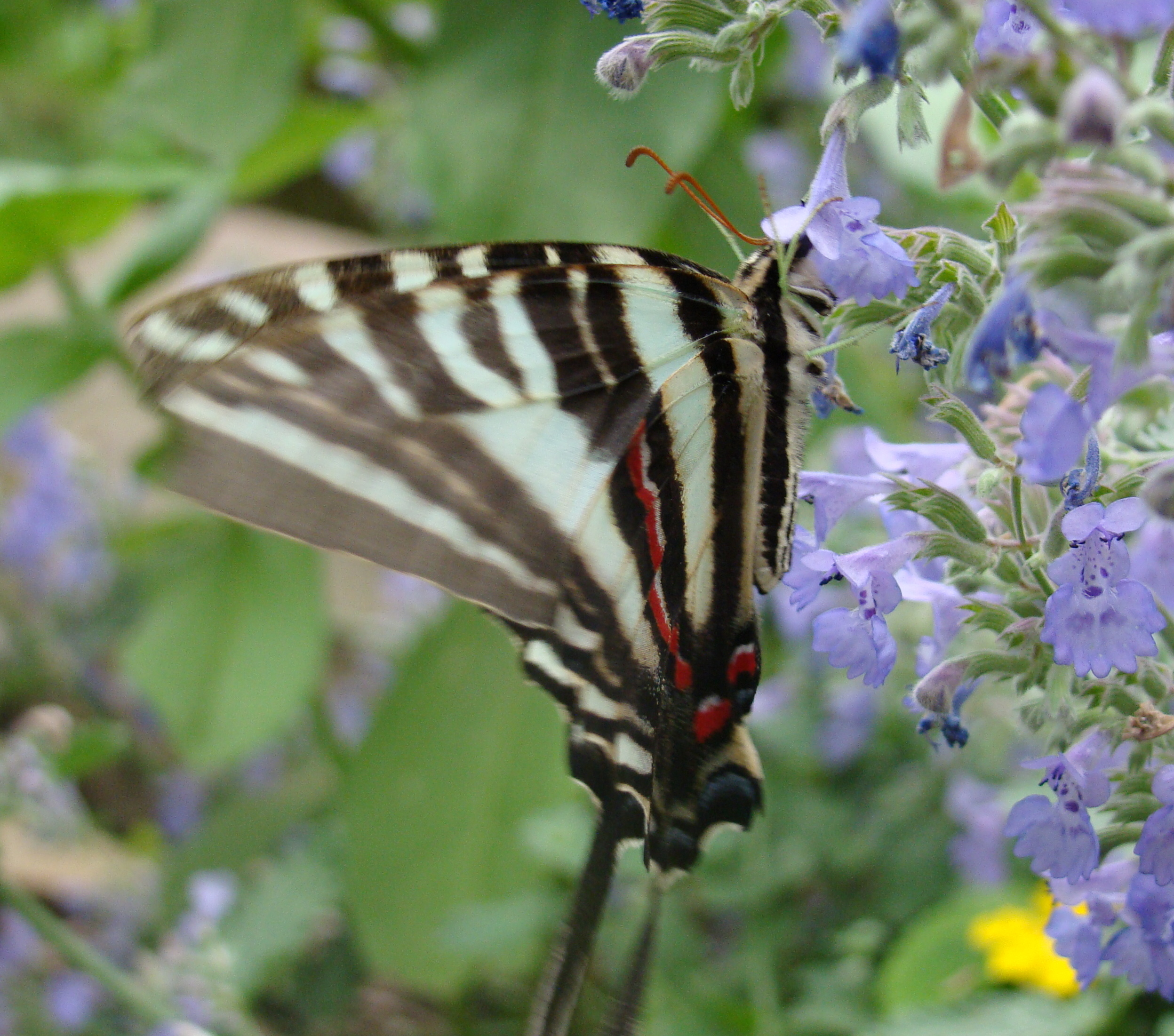 Filebutterfly house 10g wikimedia commons filebutterfly house 10g buycottarizona Images
