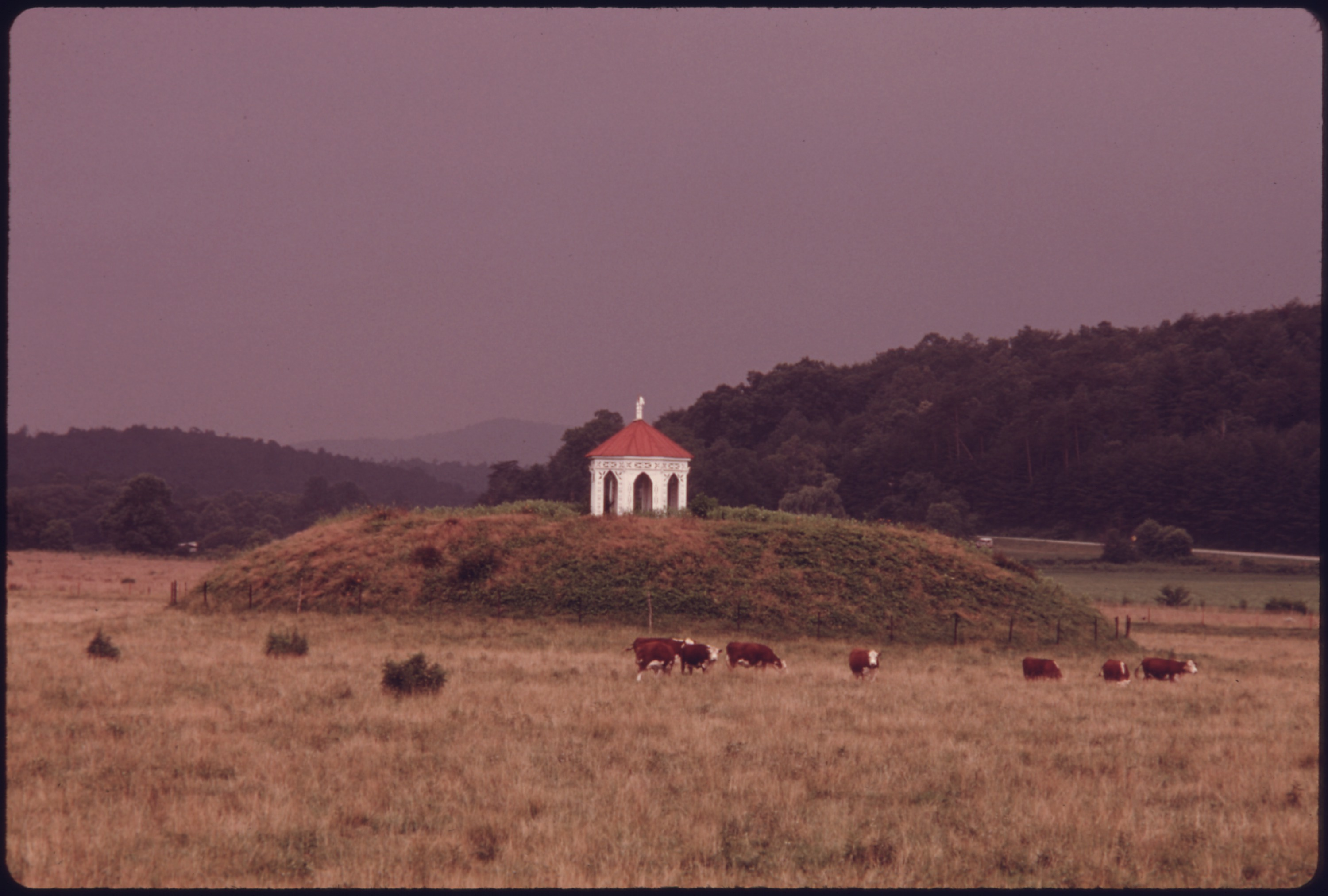 File cattle grazing near the nacoochee indian mound in the for Indian mound fish camp