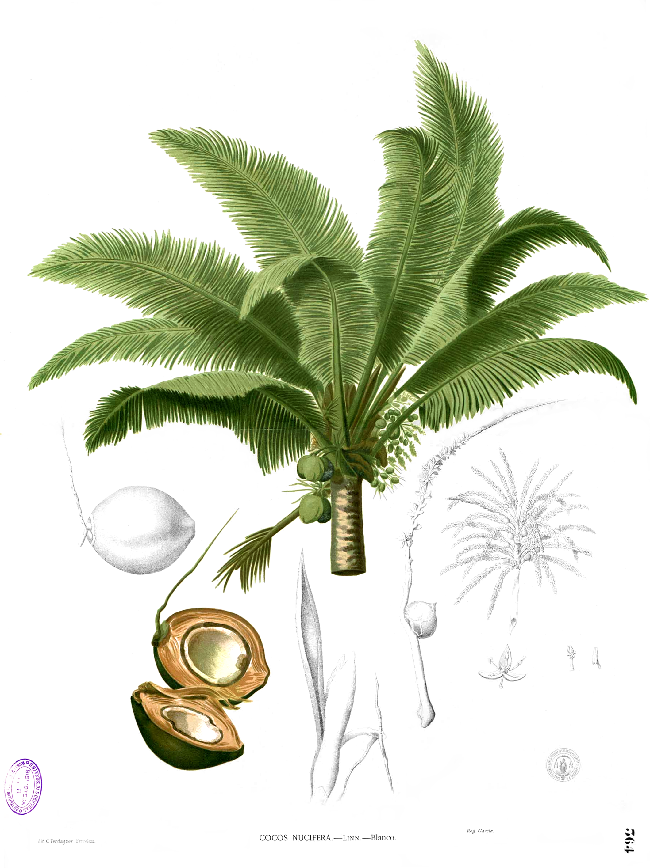 Coconut Oil For Natural Black Hair