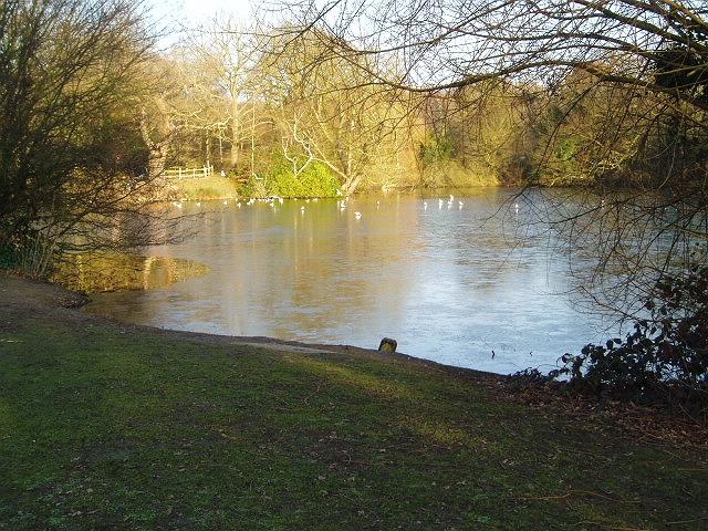 Danbury Lakes - Middle Lake - geograph.org.uk - 332407