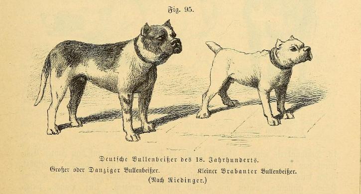 File:Danziger und Brabanter Bullenbeißer Beckmann.png