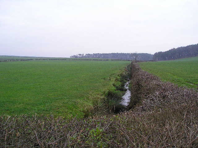 Drainage Ditch - geograph.org.uk - 88642.jpg