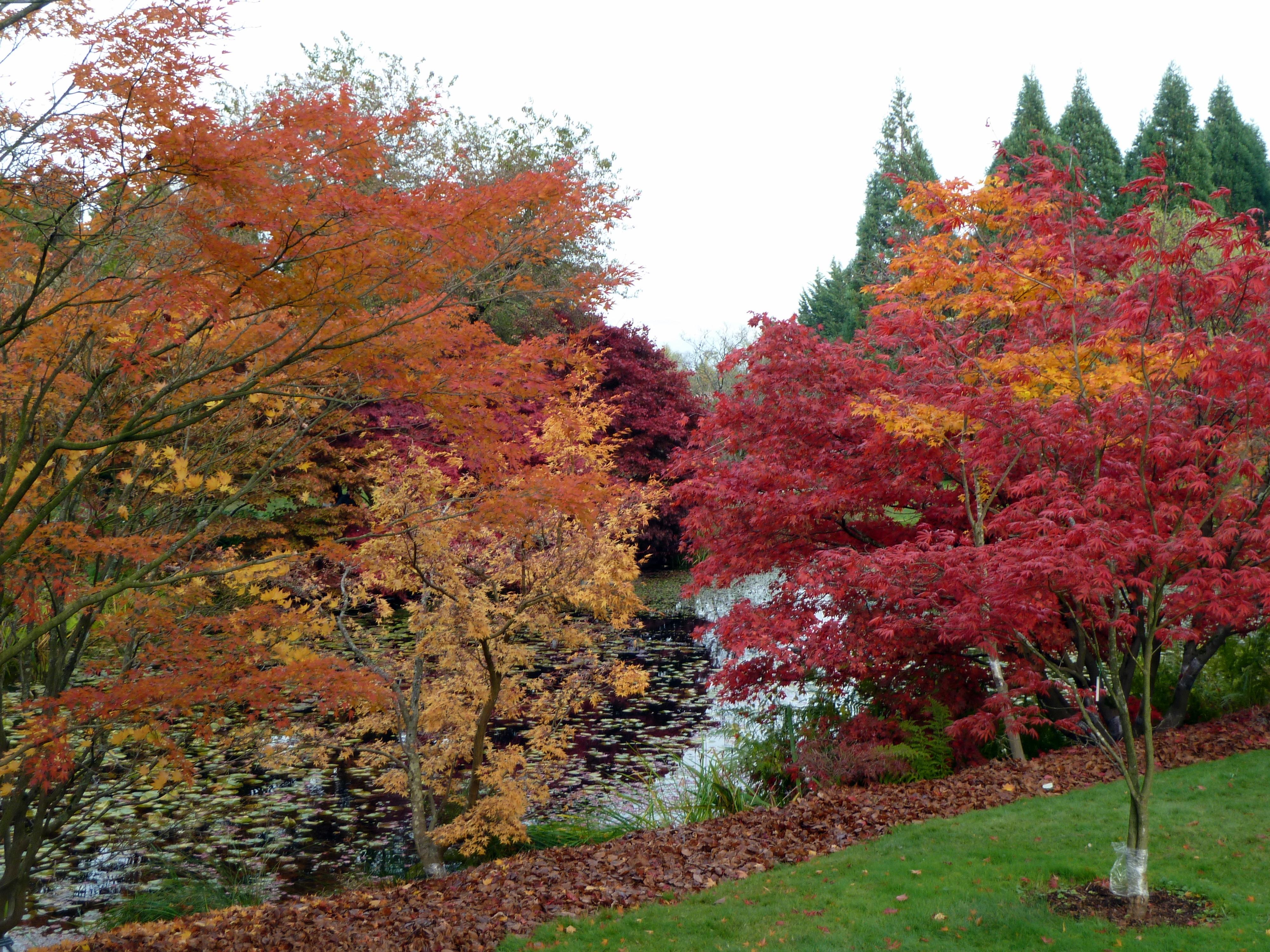 File:Fall Colours At VanDusen Botanical Garden