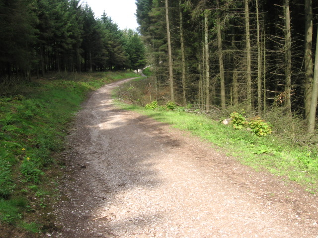 Footpath to Trentabank in Macclesfield Forest - geograph.org.uk - 1413845