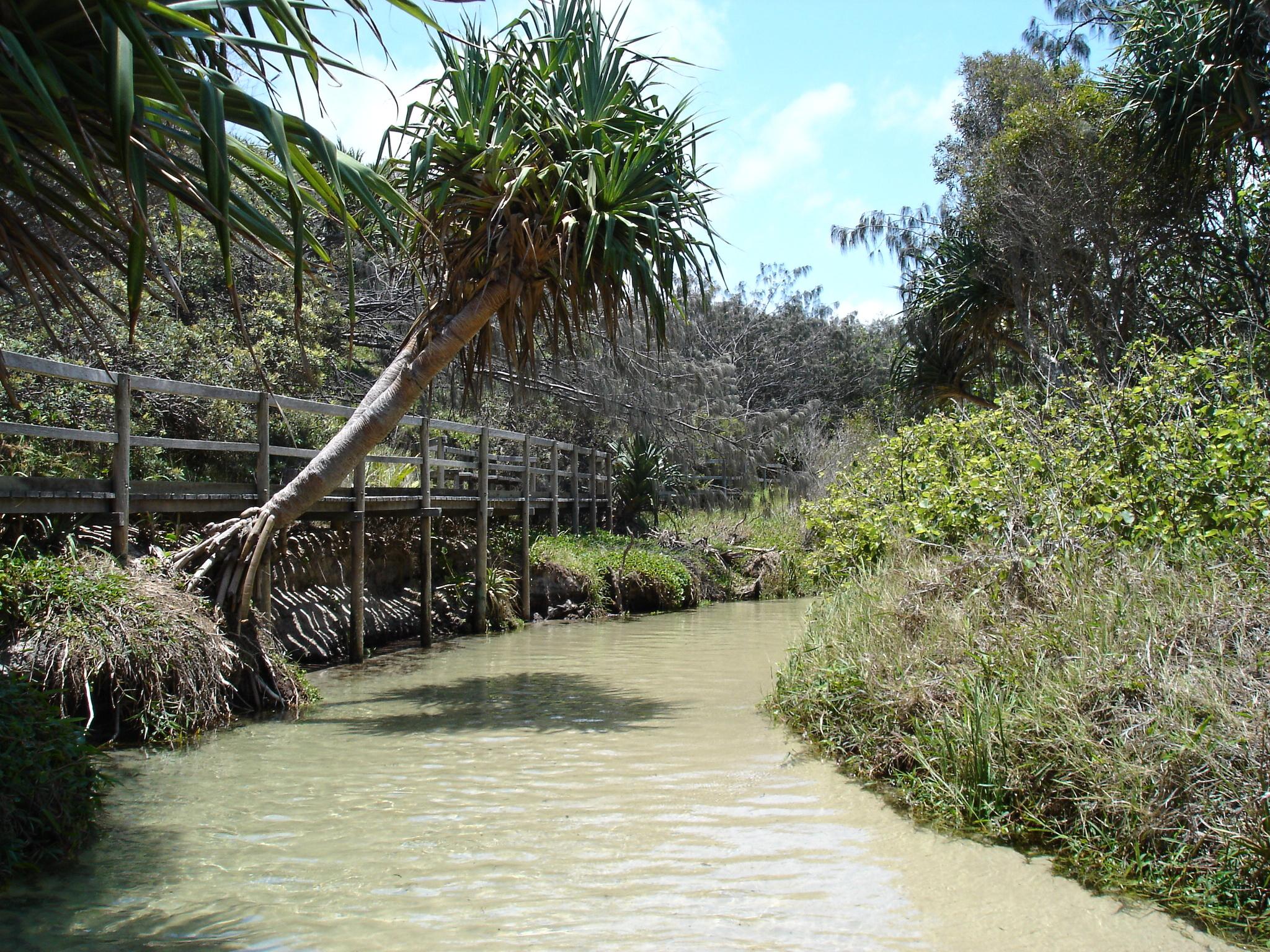 Eli Creek in Fraser Creek