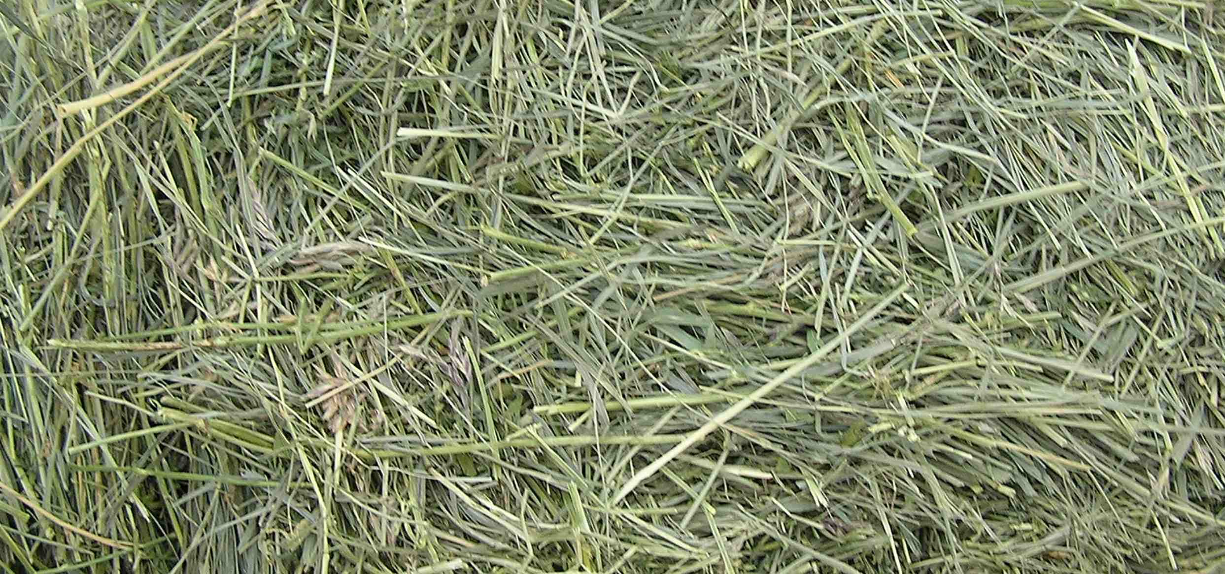 Types of Grass Hay for Horses