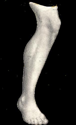 الإيجار منتصر واجب الام ساق القدم جانب عند الضغط العظم Comertinsaat Com