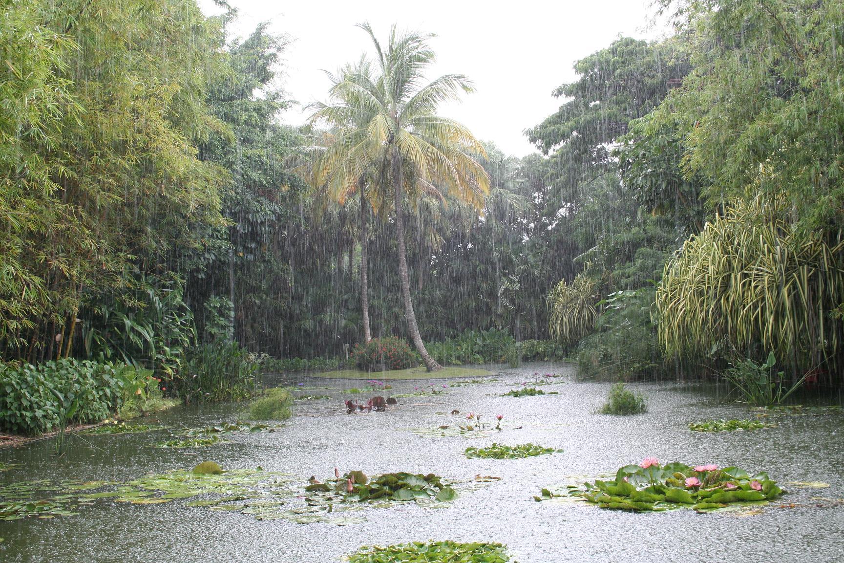 Jardin botanique de Deshaies - Wikipedia