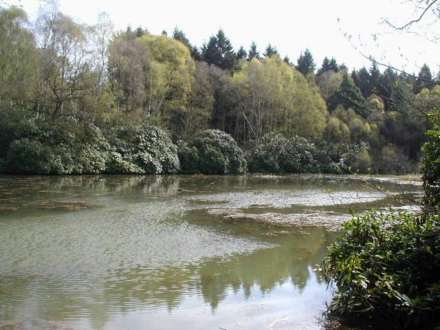Lake in the woods - geograph.org.uk - 163419