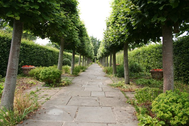 Lime Walk at Sissinghurst - geograph.org.uk - 188844
