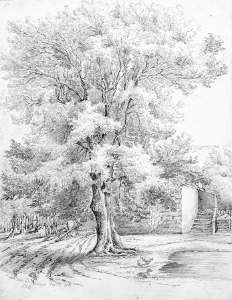 Lucy Bacon sketch of an ash tree.JPG