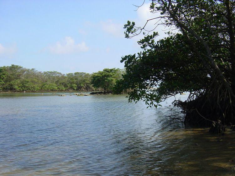 Mangrove of Miyara River