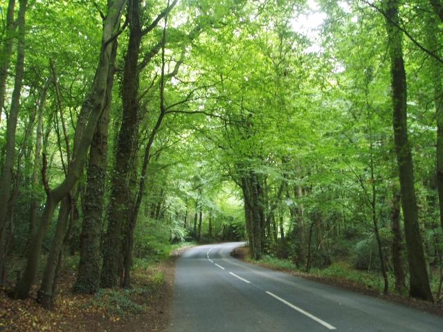 Merle Common woodland - geograph.org.uk - 55627