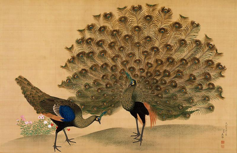 Paon et paonne. Peinture sur soie de Maruyama Ôkyo, 1781.