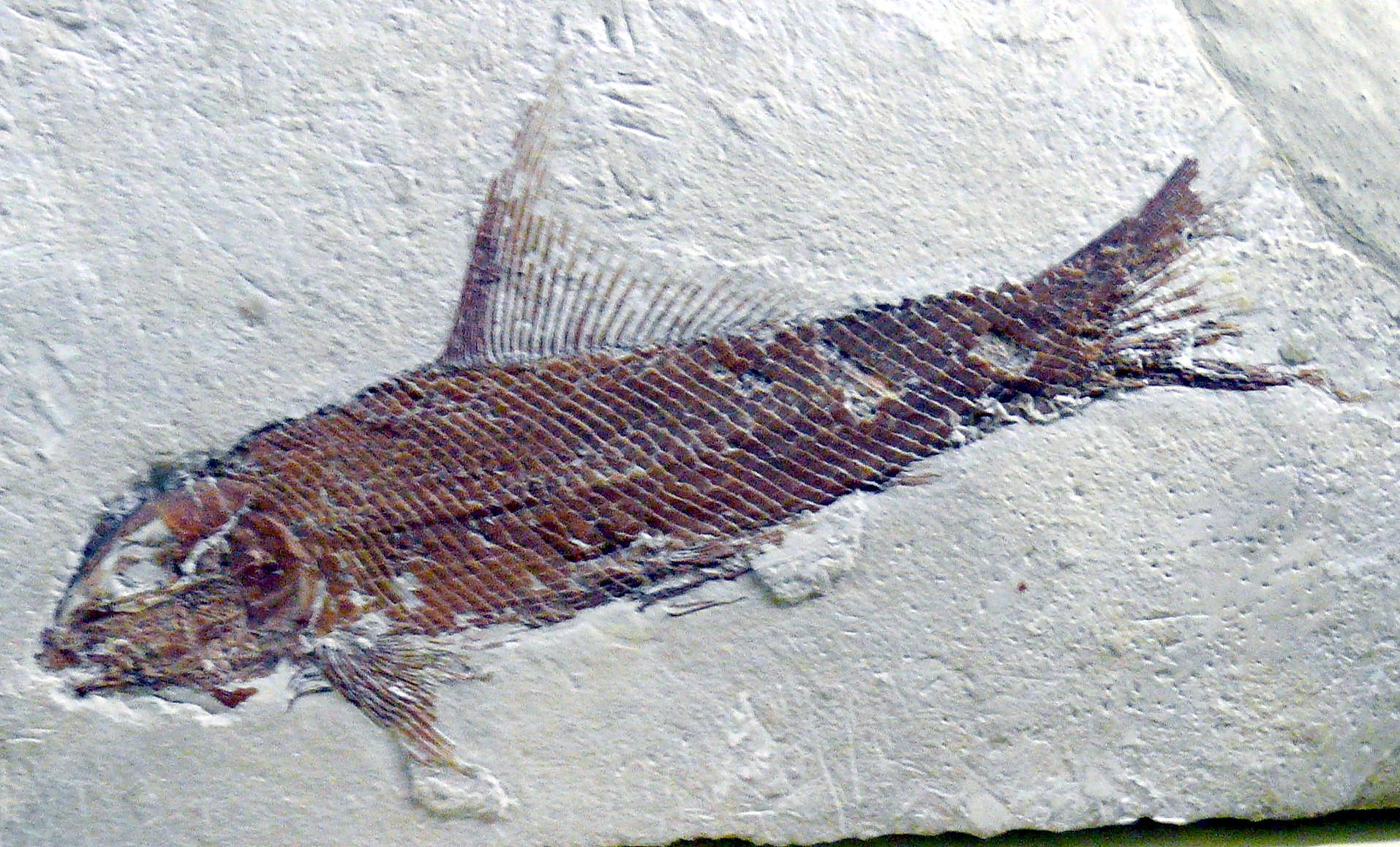 Wat zijn twee methoden voor het daten van fossielen