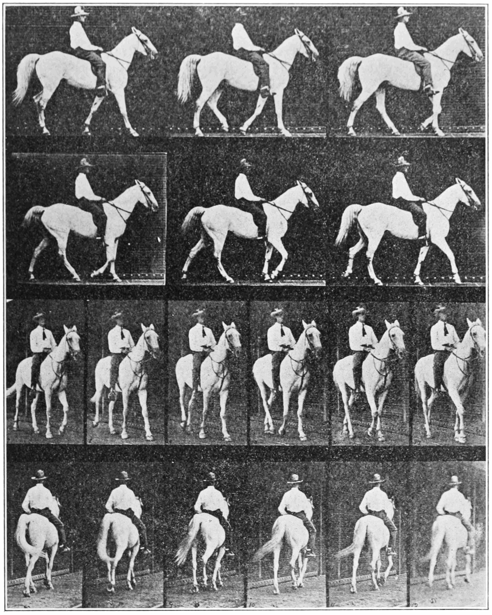 PSM V83 D521 Back views of a walking horse.png
