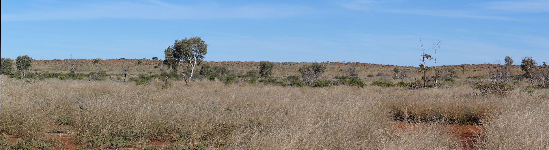 Pano of Gunbarrel grasslands and dune in the Gibson Desert Nature Reserve. (6937186643).jpg