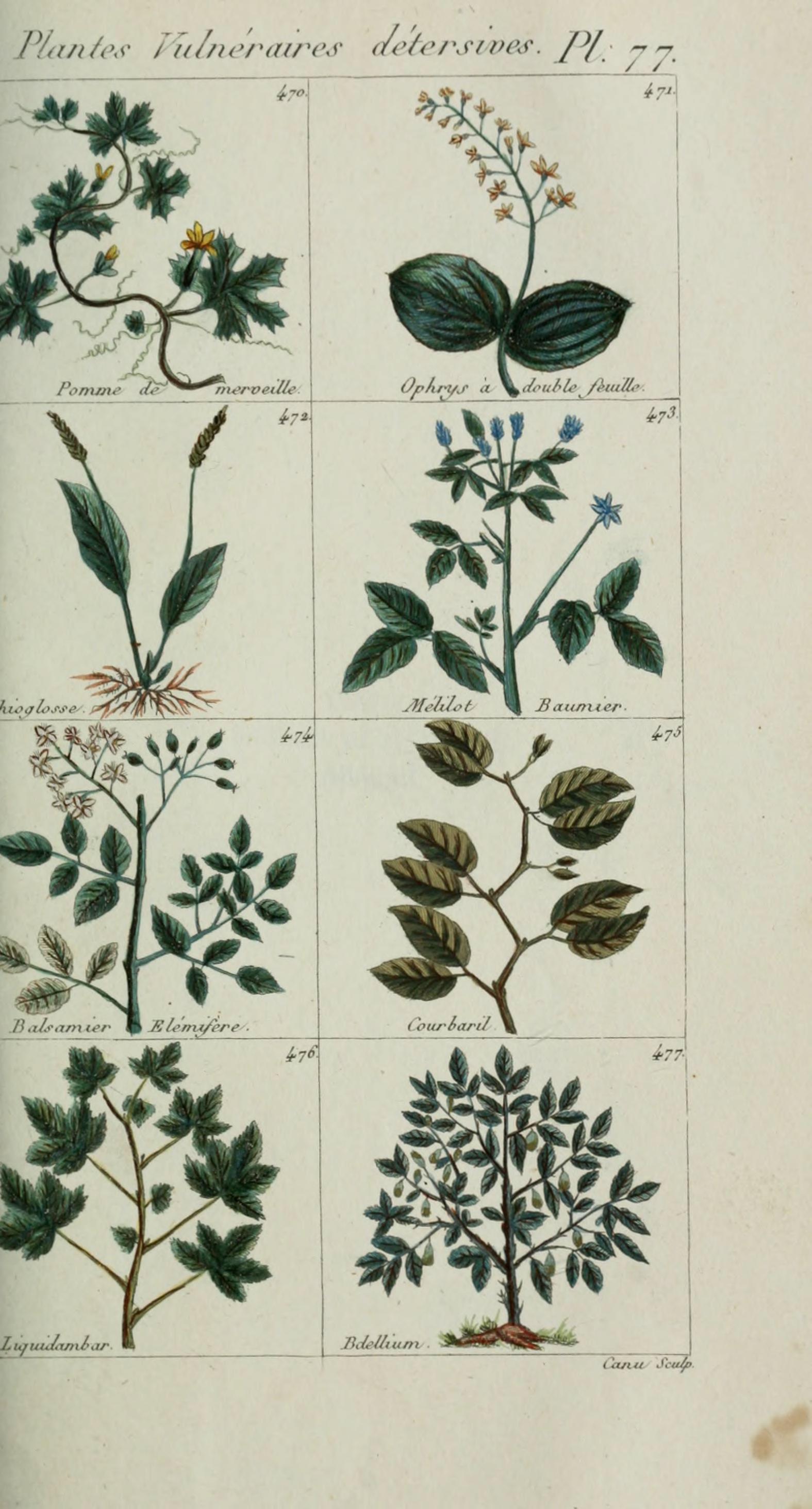 File plantes usuelles indig nes et exotiques pl 77 for Plante exotique
