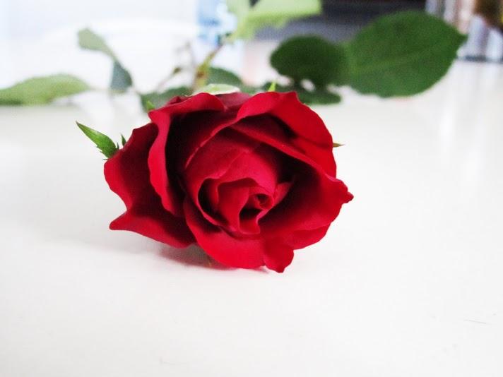 A single red tea rose, Author Brandy Cross (CC BY-SA 3.0 Unported)