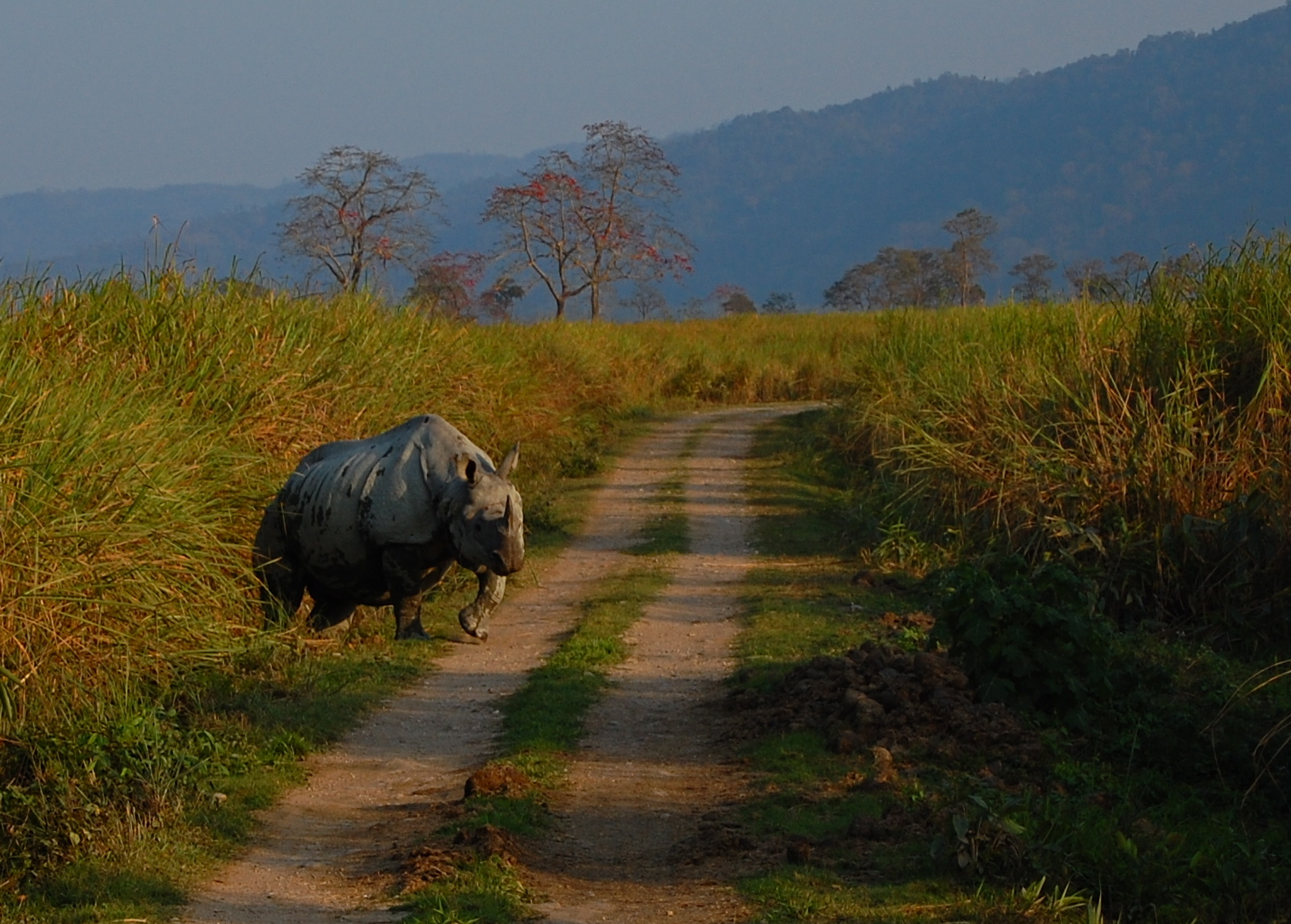 Kaziranga National Forest in Assam, one of the best places to visit among the Seven Sisters of India