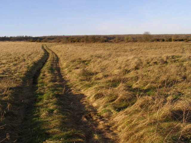 Track on Martin Down NNR - geograph.org.uk - 673011