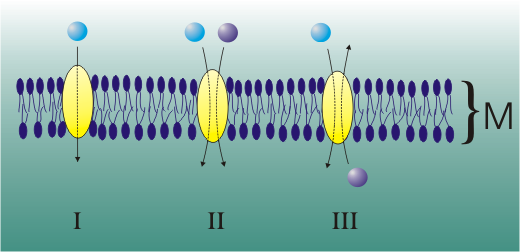 Cytologie: Aktiver und passiver Transport