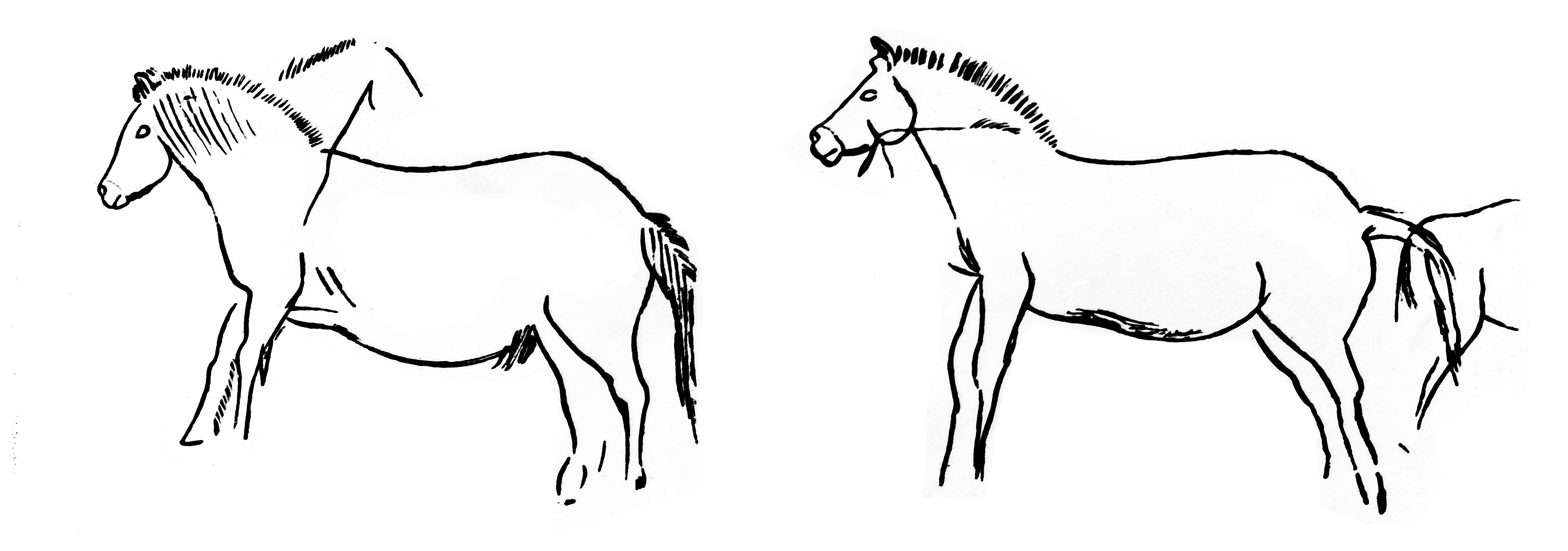 File Two Horses Upper Palaeolithic From Line Drawing By Breuil Wellcome M0015295 Jpg Wikimedia Commons