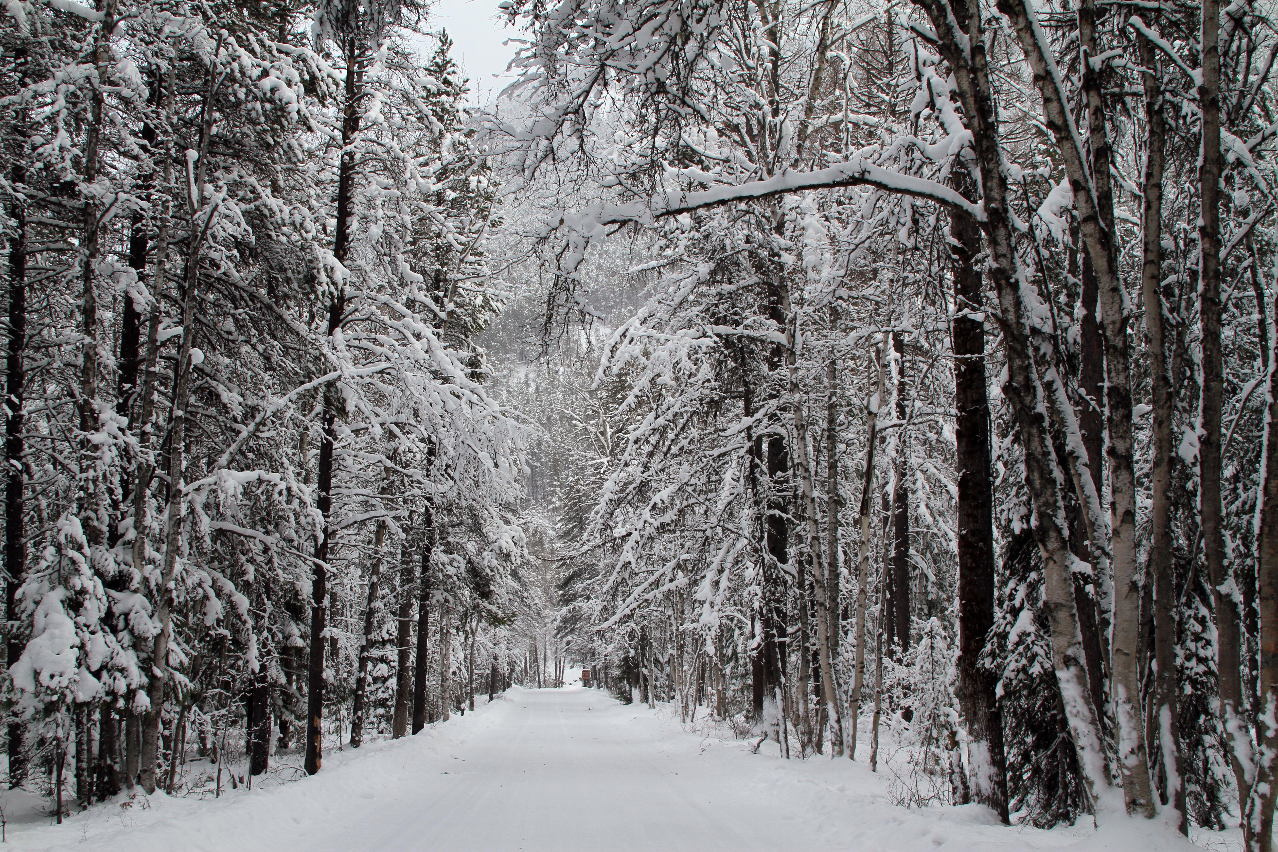 File:Winter Wonderland in Apgar Village (5230363852).jpg