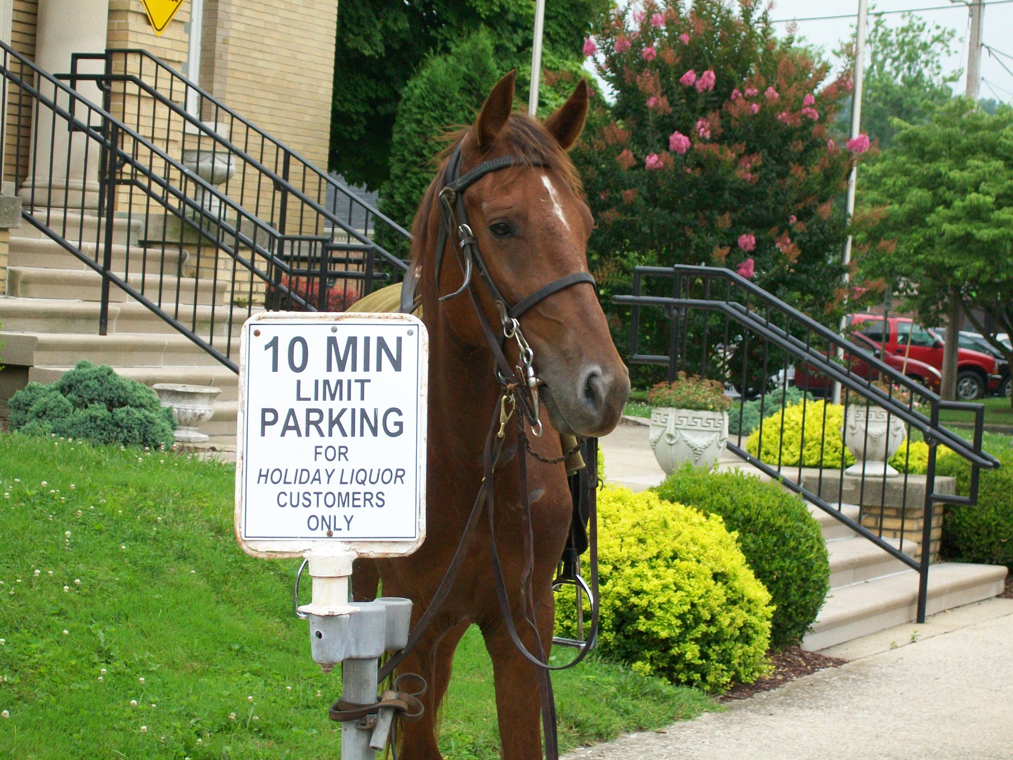 Filea horse tied to a 10 minute parking sign at the battle of filea horse tied to a 10 minute parking sign at the battle of corydon buycottarizona Gallery