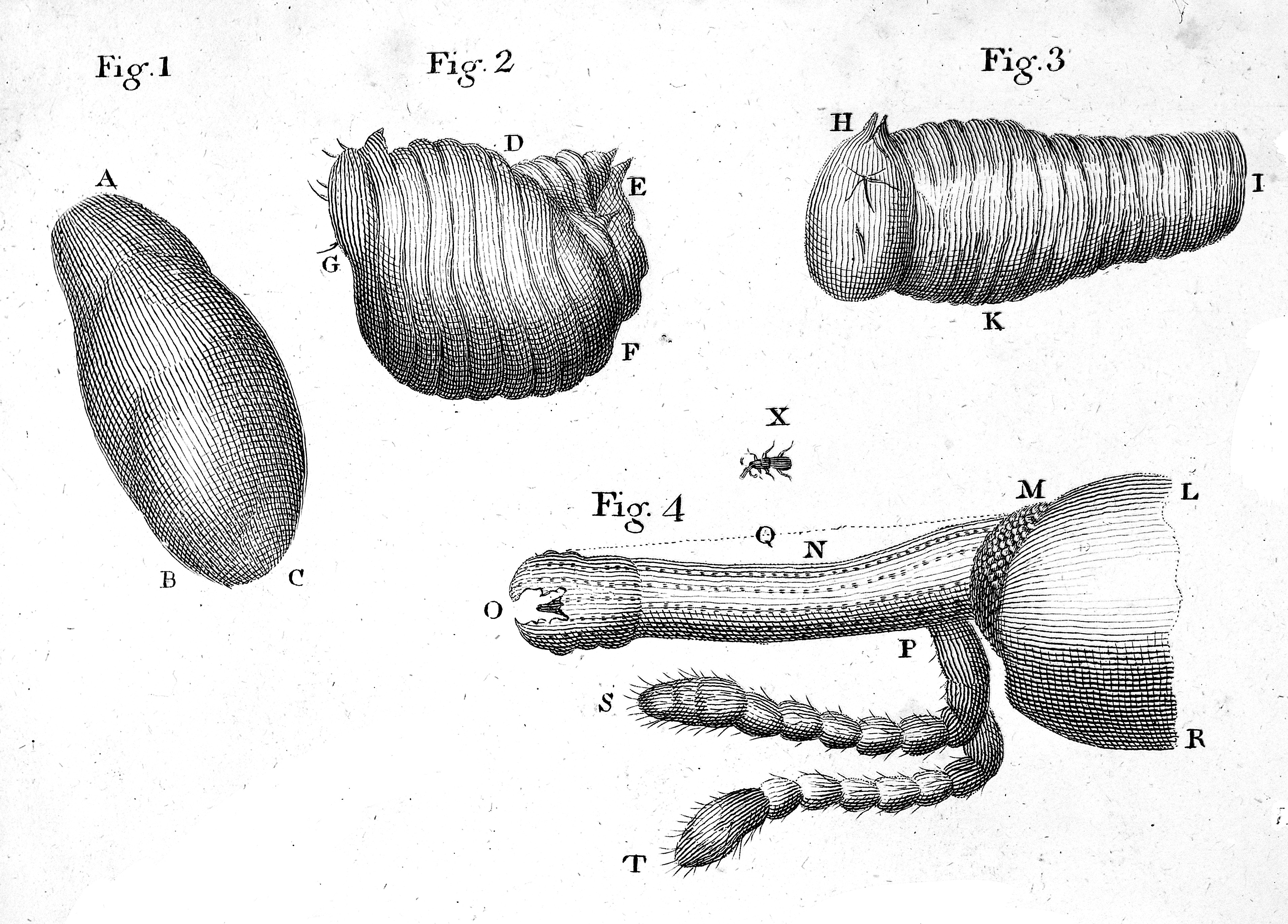 File:Anatomy of insects. Wellcome M0010789.jpg - Wikimedia Commons