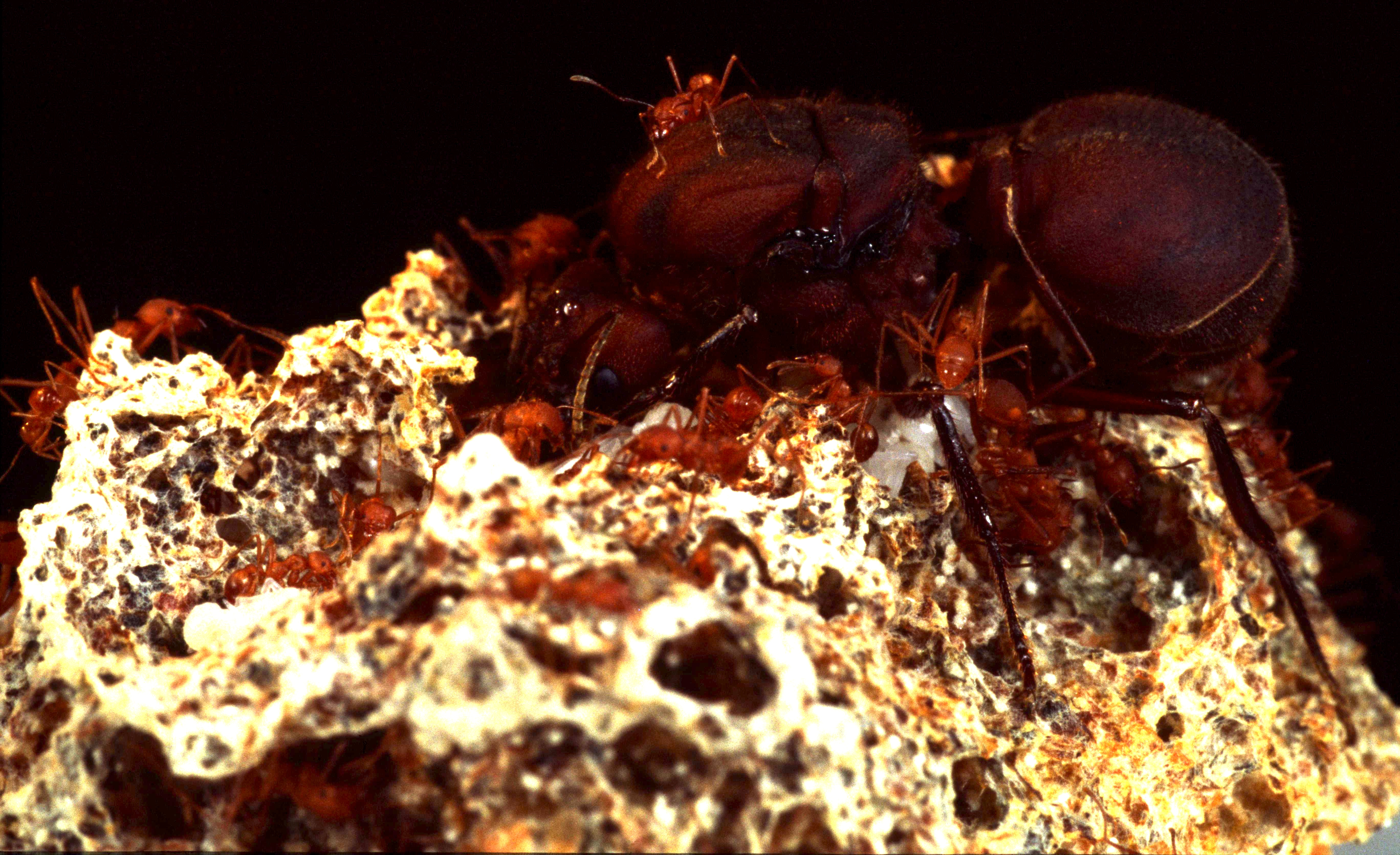 ants and humans similarities