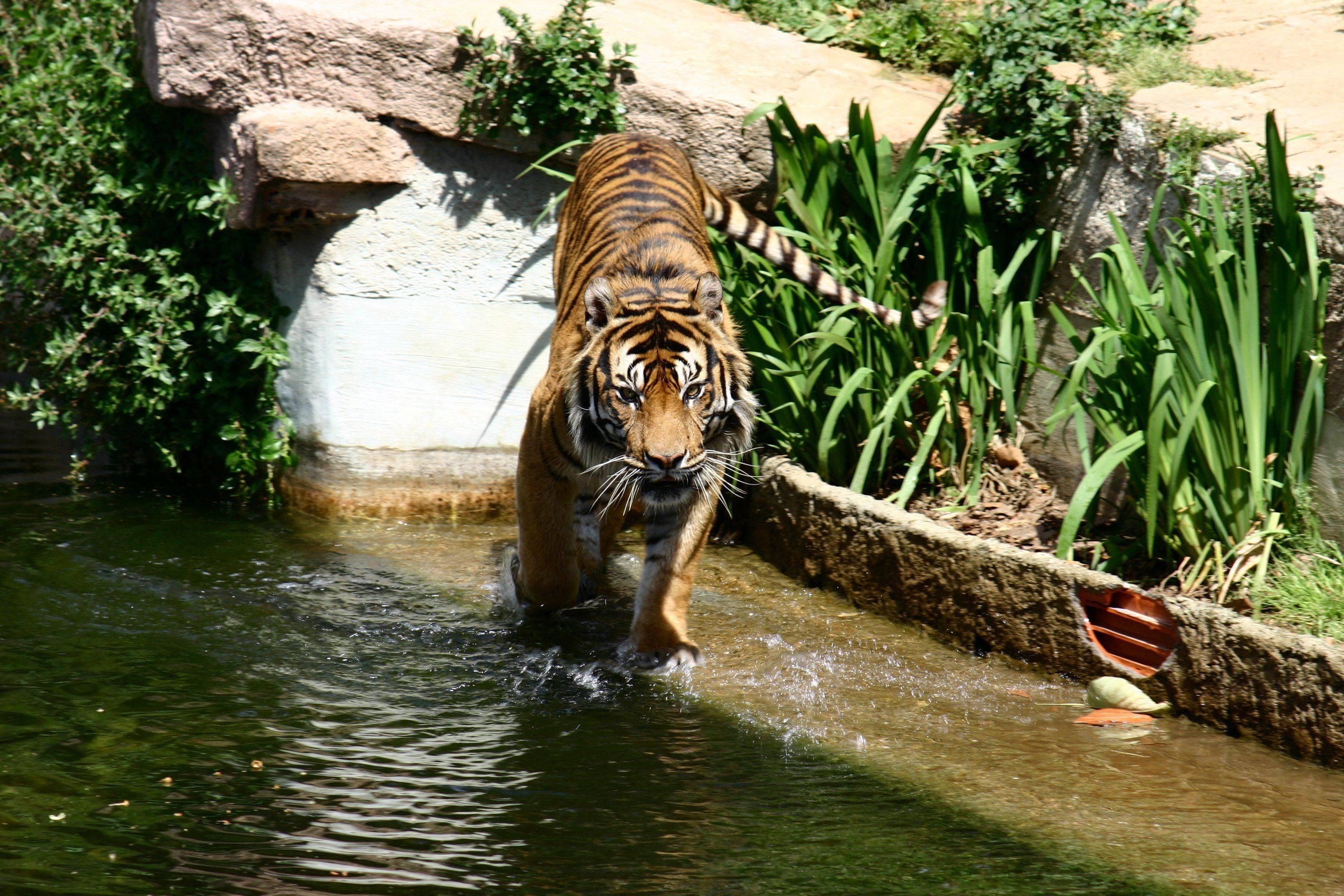 Fotos de animales en zoologicos 6
