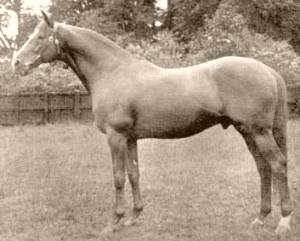 Blue Peter (British horse) British Thoroughbred racehorse