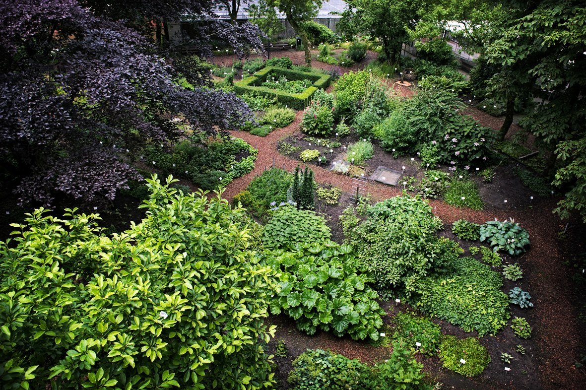 Botanische tuin afrikaanderwijk wikipedia for De tuinen rotterdam