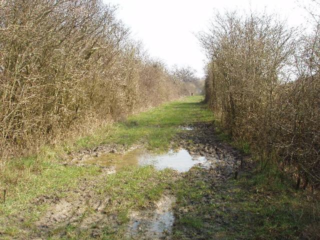 Bridleway across Otmoor - geograph.org.uk - 386644