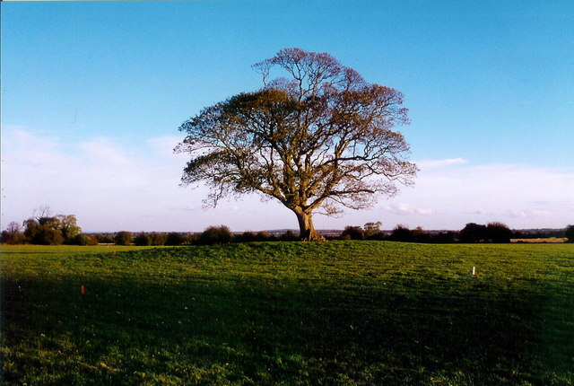 File:Burial mound at Claristown, Co. Meath - geograph.org.uk - 725829.jpg