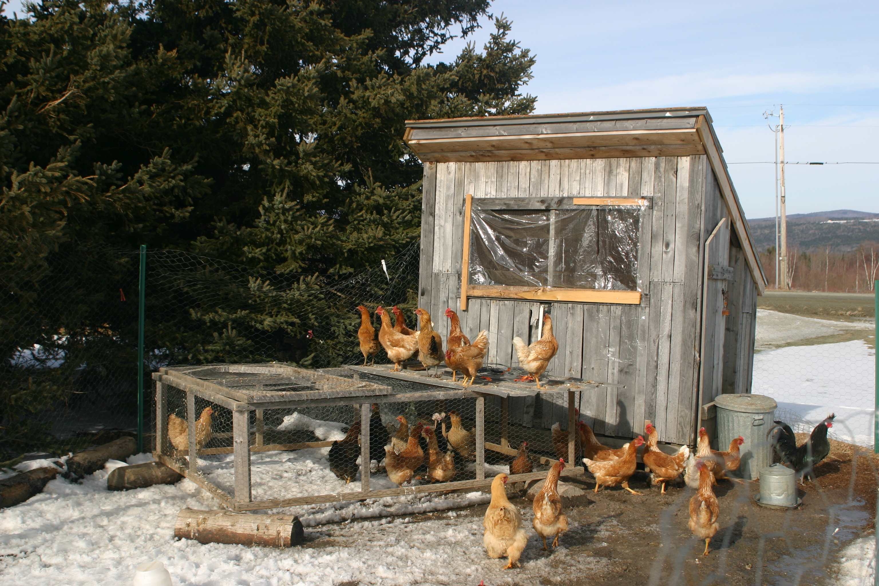 Quick and easy ways to clean a chicken coop coops and cages for How to build a chicken hutch