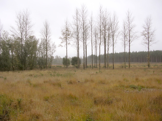 File:Cleared area in the Ipley Inclosure, New Forest - geograph.org.uk - 70513.jpg