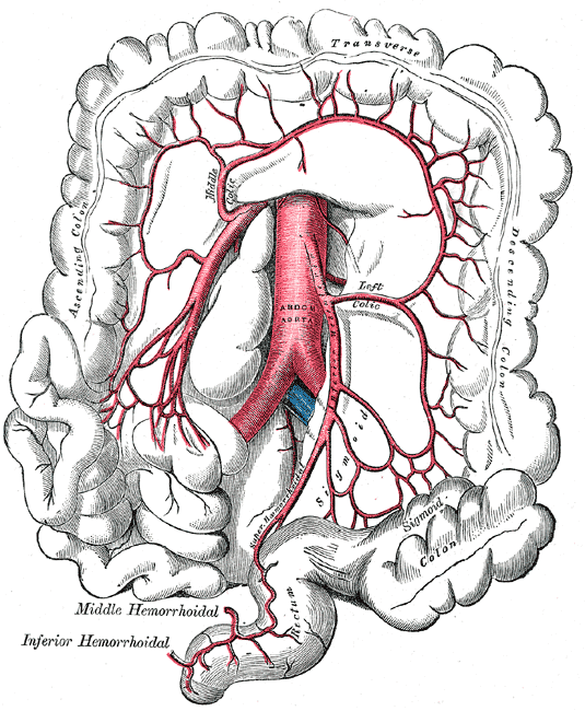 Arteria mesenterica inferior – Wikipedia