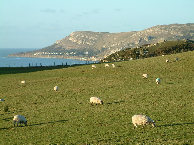 Great Orme - geograph.org.uk - 93645