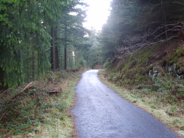 In Dodd Wood - geograph.org.uk - 1070325