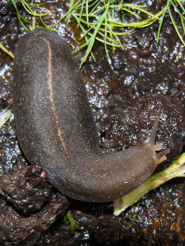 Slugs are a nuisance