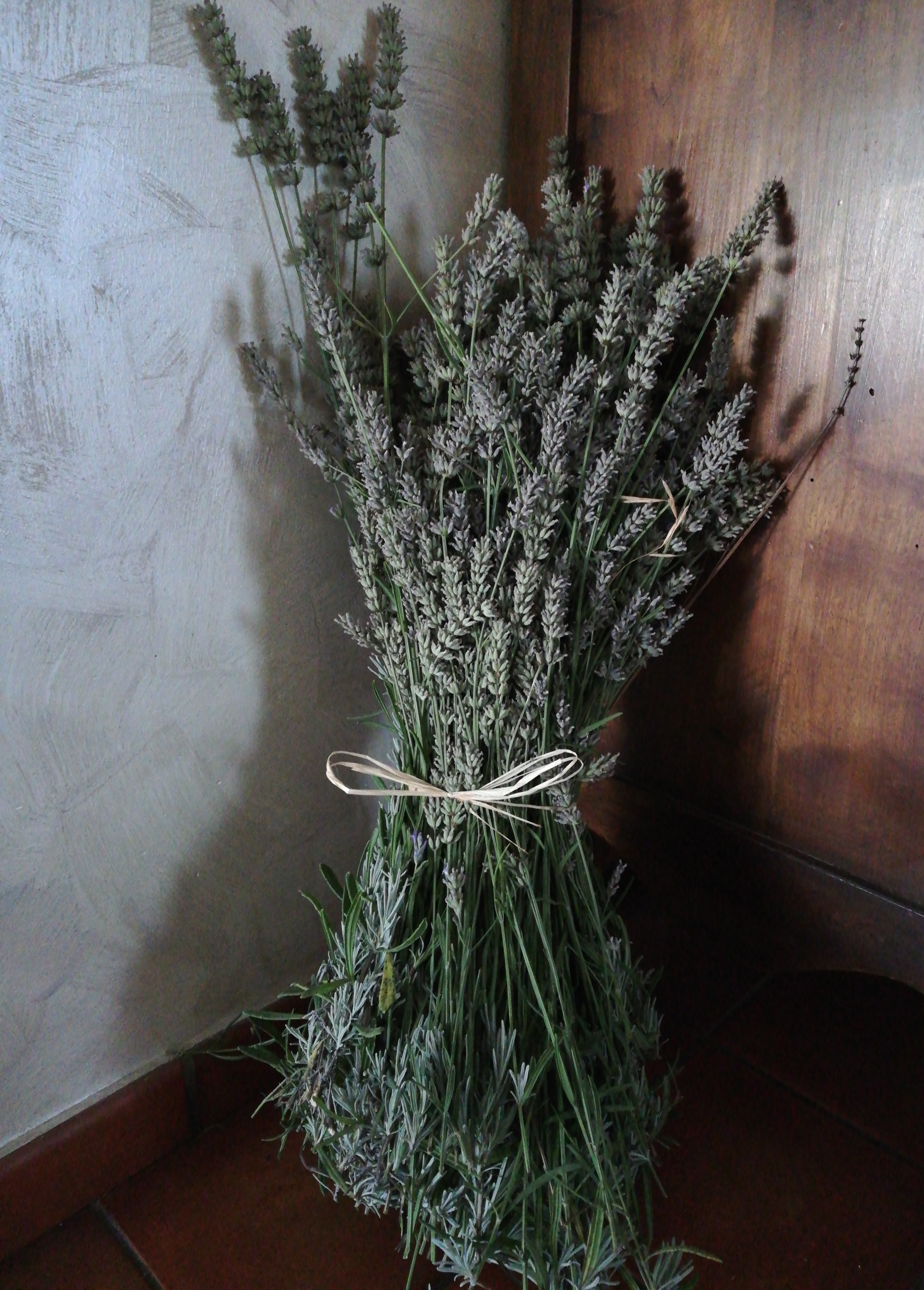 Vertu De La Lavande fichier:lavande lavender bouquet — wikipédia